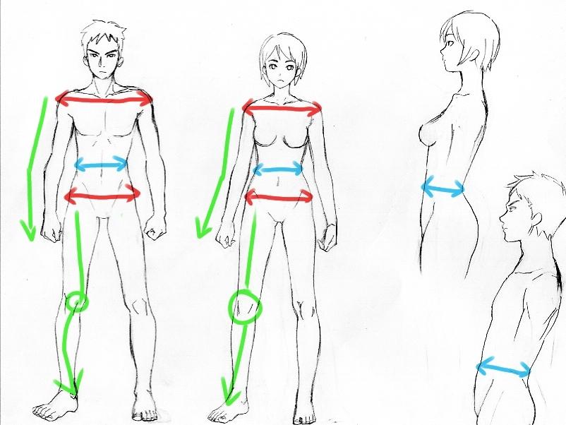 女性と男性の骨格の違い